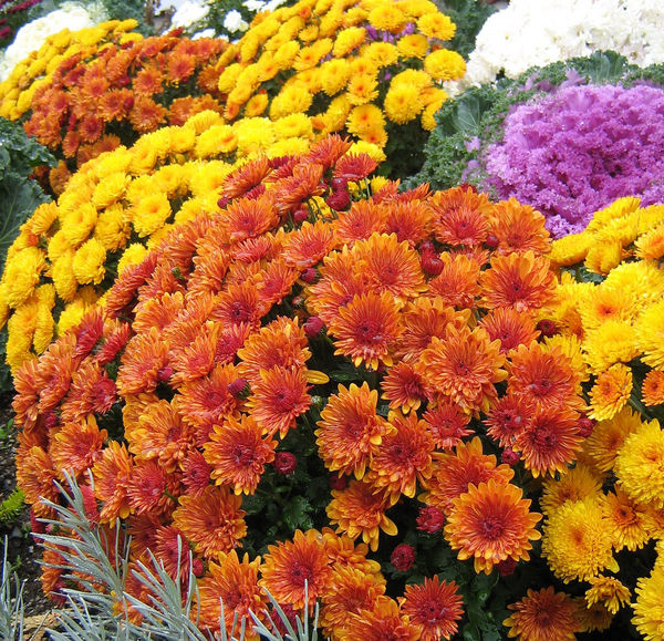 51-mums-the-word_l