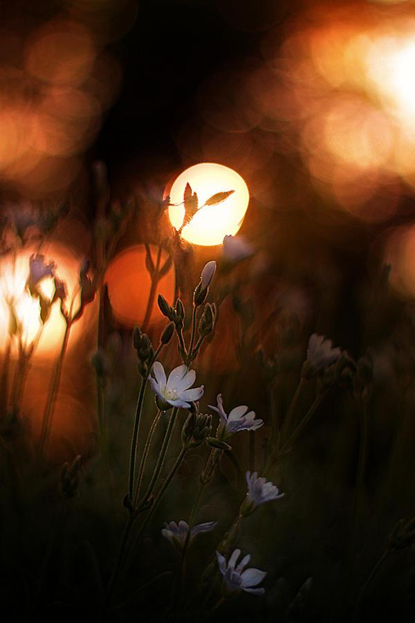 the-golden-lights-the-loving-prayers_l
