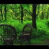 przydomowy las